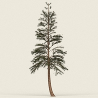 Game Ready Conifer Tree 04 3D Model