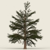 10 41 37 429 conifer tree 05 01 4