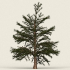 Game Ready Conifer Tree 05 3D Model
