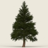 Game Ready Conifer Tree 06 3D Model