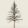 13 24 48 823 conifer tree 07 01 4