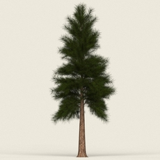 Game Ready Conifer Tree 09 3D Model