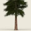 13 43 05 232 conifer tree 09 02 4