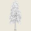 13 43 06 79 conifer tree 09 03 4