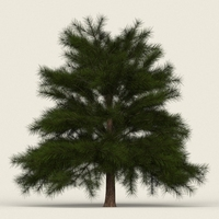 Game Ready Conifer Tree 10 3D Model