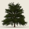 13 52 37 212 conifer tree 10 01 4