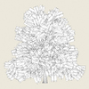 13 52 38 403 conifer tree 10 03 4