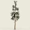 14 00 39 410 conifer tree 11 01 4