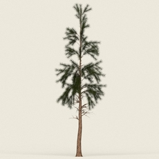 Game Ready Conifer Tree 11 3D Model