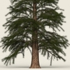 14 11 02 223 conifer tree 12 02 4