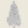 14 11 02 519 conifer tree 12 03 4