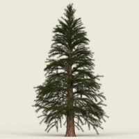 Game Ready Conifer Tree 12 3D Model