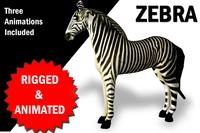 3D Zebra Rigged and Animated 3D Model