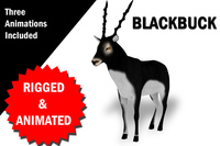 3D Blackbuck RIgged and Animated 3D Model