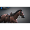 10 48 02 678 3d animated horses 001 4
