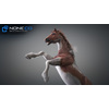 10 48 02 701 3d animated horses 002 4