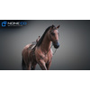 10 48 02 732 3d animated horses 003 4