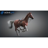 10 48 02 733 3d animated horses 005 4