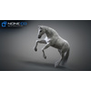 10 48 03 200 3d animated horses 008 4