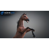 10 48 03 243 3d animated horses 010 4