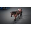 10 48 03 967 3d animated horses 017 4