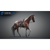 10 48 04 276 3d animated horses 020 4