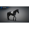 10 48 05 988 3d animated horses 040 4