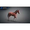10 48 06 222 3d animated horses 042 4