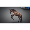 10 48 06 403 3d animated horses 045 4