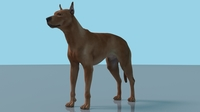 German Pinscher Dog Maya Rig 0.0.1 for Maya