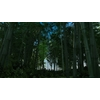 17 41 43 437 bamboo forest 02 1 4