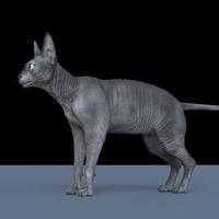 3D Sphynx Cat Maya Rig 0.0.1 for Maya