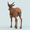 13 21 13 636 realistic wollaton deer 03 4
