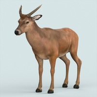Realistic Wollaton Deer 3D Model
