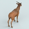 13 21 15 349 realistic wollaton deer 04 4