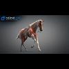 11 44 34 530 horse vray 05 4