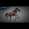 11 44 34 983 horse vray 03 4