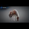 11 44 36 285 horse vray 19 4