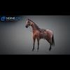 11 44 36 676 horse vray 23 4