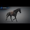 11 44 37 168 horse vray 28 4