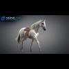 11 44 37 99 horse vray 26 4