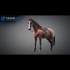 11 44 38 290 horse vray 33 4