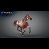 11 44 38 815 horse vray 43 4