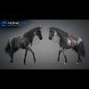 11 44 40 488 horse vray 56 4