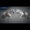 11 44 40 72 horse vray 53 4