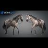 11 44 41 156 horse vray 63 4