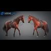 11 44 41 184 horse vray 62 4
