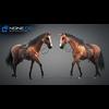 11 44 41 37 horse vray 61 4