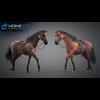 11 44 42 1 horse vray 67 4