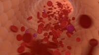 Bloodstream 3D Model